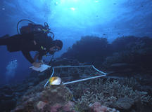 Reef Check 2010